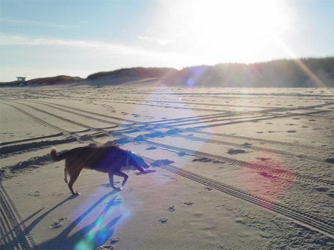 2007-beachdog.jpg